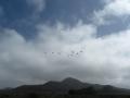 Mont del Oro CA